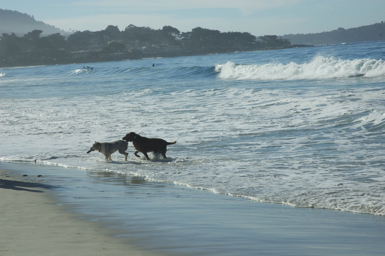 Carmel_Dog_Beach