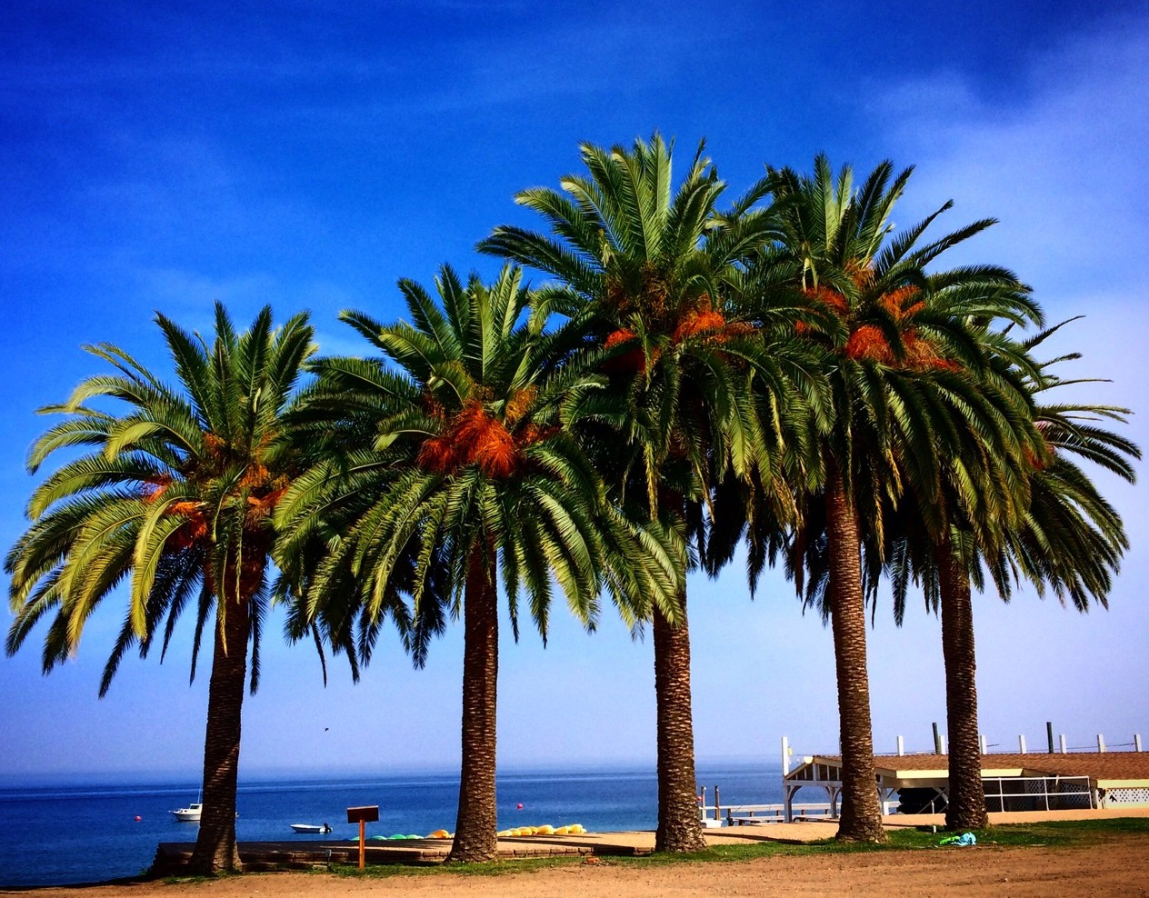 catalina_island_photo_Yvonne-Condes