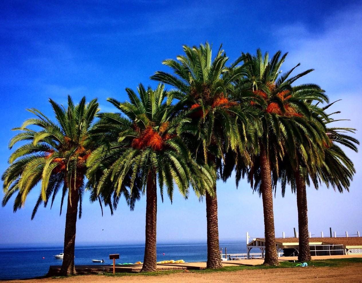 catalina_island_photo_Yvonne-Condes