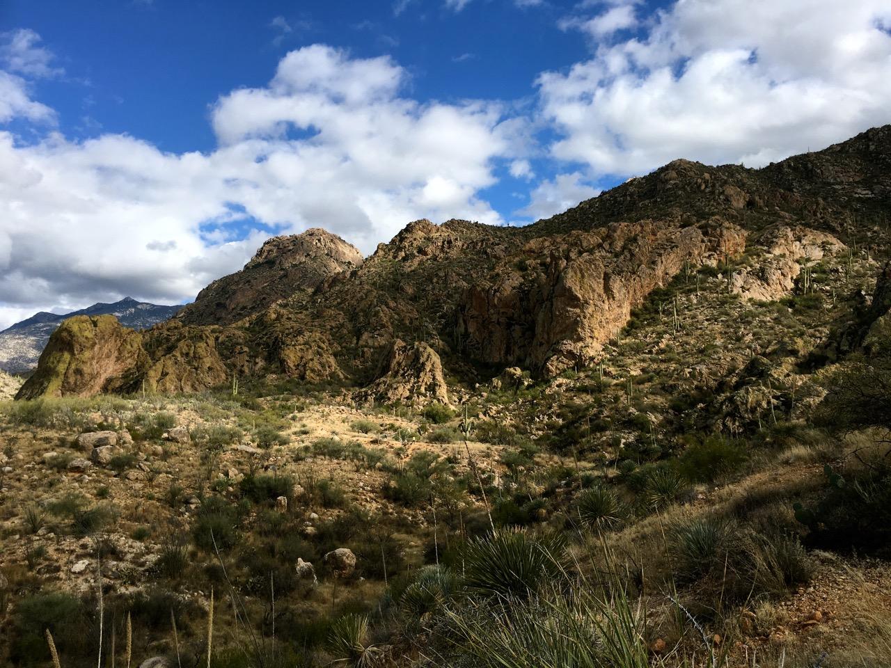 Catalina State Park in Oro Valley, Arizona
