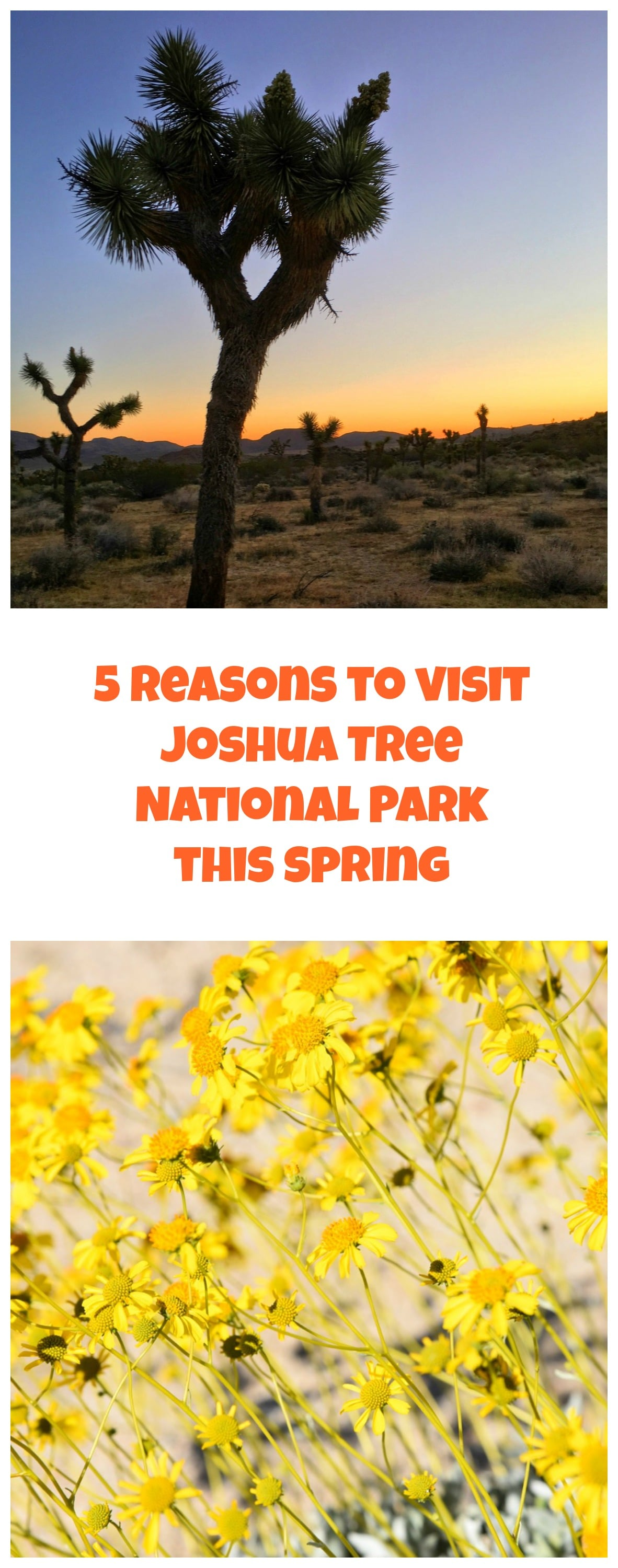 5 Reasons to Visit Joshua Tree National Park this Spring