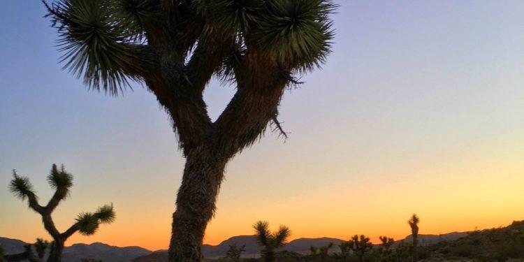 Sunrise at Joshua Tree National Park