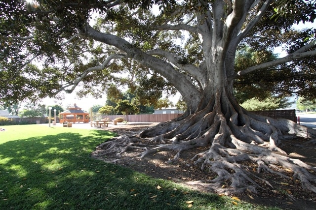 Big Tree Park is one of the many fun places to take kids in Glendora, CA