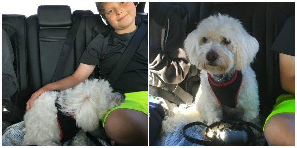Boy and dog belted into the Lincoln MKX
