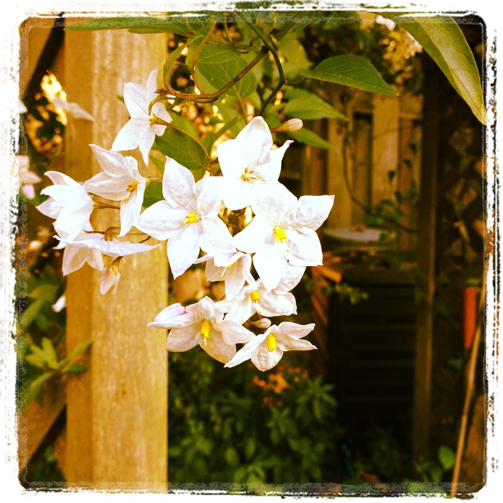 Flowers  (photo by Yvonne Condes)