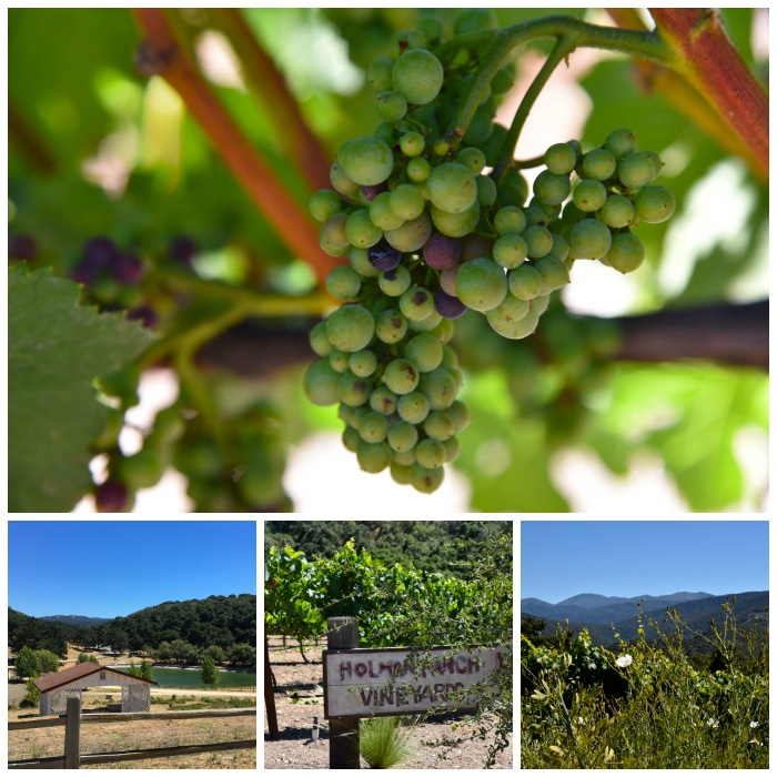 The Vineyard and grounds at Holman Ranch in Carmel Valley