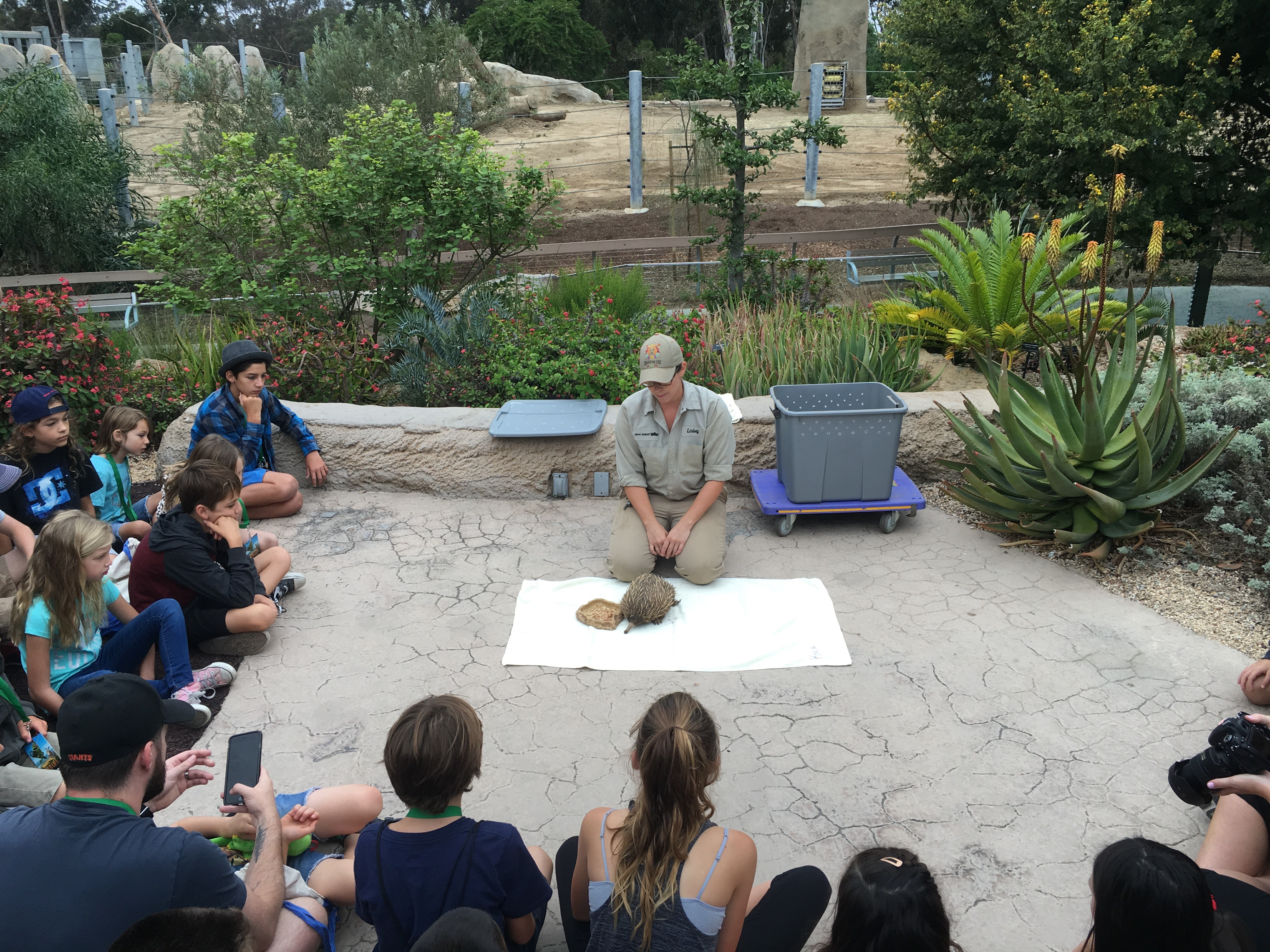 Echidna at San Diego Zoo