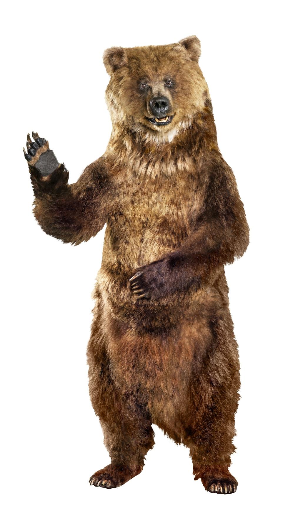 Golden Bear Bingo Mascot Energy Upgrade California game for kids