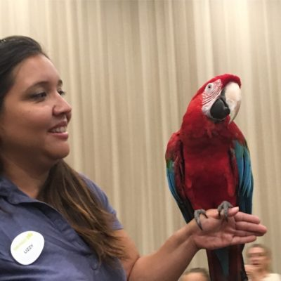 Green Wing Macaw at San Diego Zoo