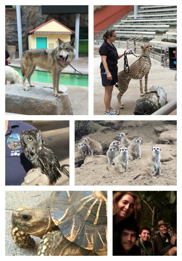 San Diego Zoo animal collage