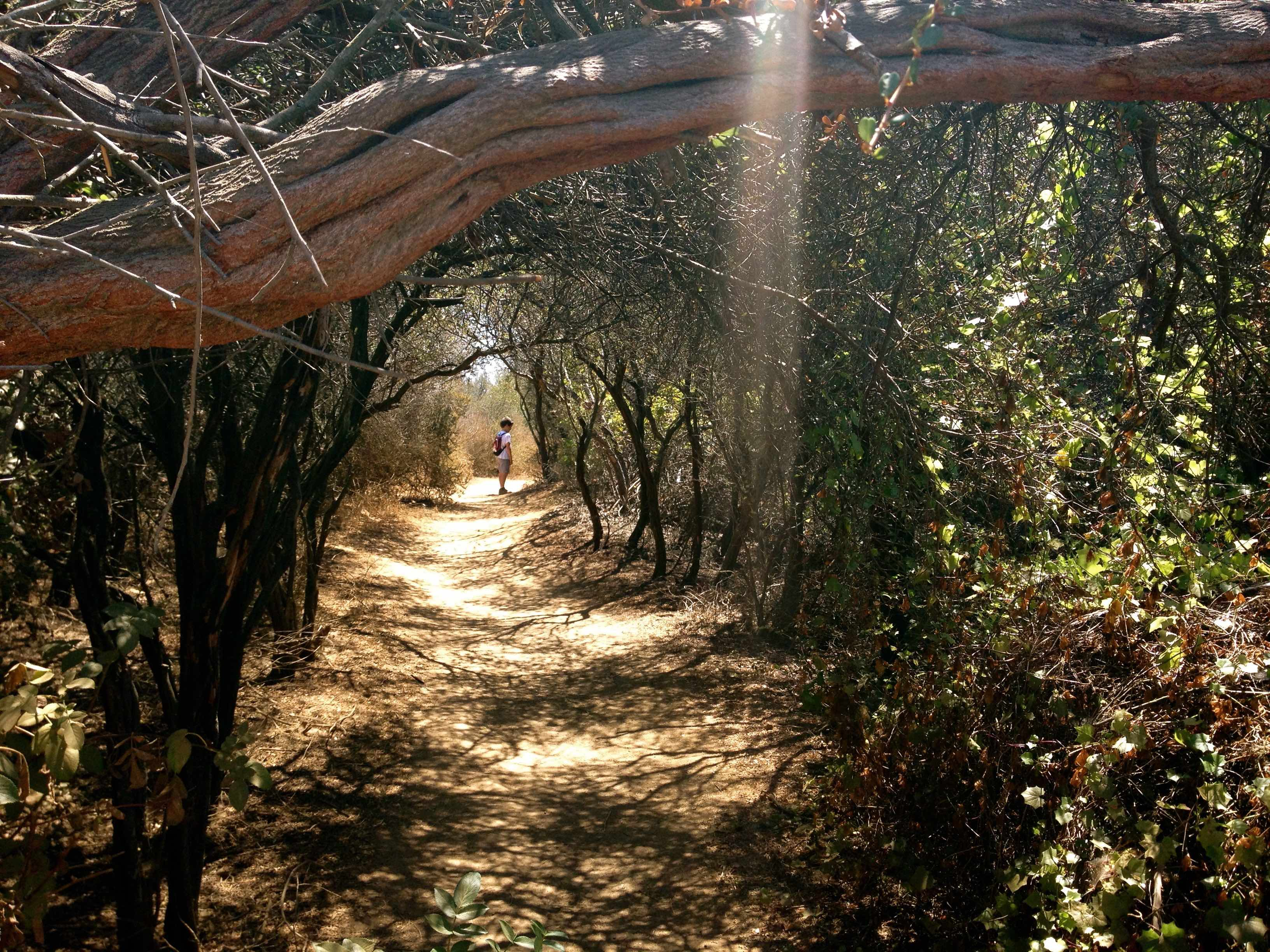 Hiking in Temescal Canyon is one of the fun things to do with kids in Pacific Palisades