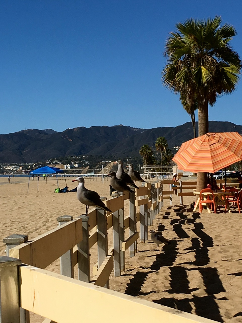 There are so many beautiful beach in Los Angeles including this one in front of Back on the Beach in Santa Monica