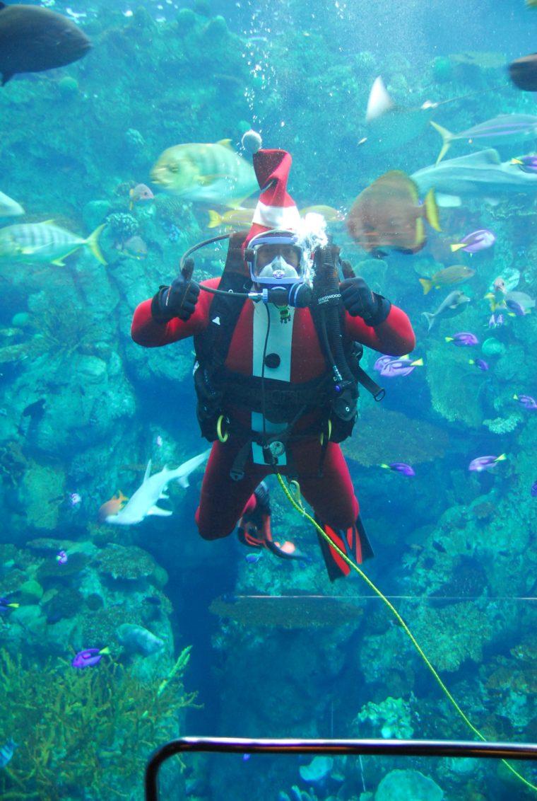 Santa underwater at Aquarium of the pacific