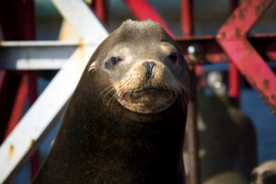 Seal photo courtesy of the Redondo Beach Pier
