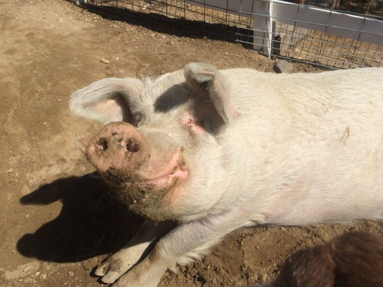 The Gentle Barn is one of the great places to visit in the Santa Clarita area.