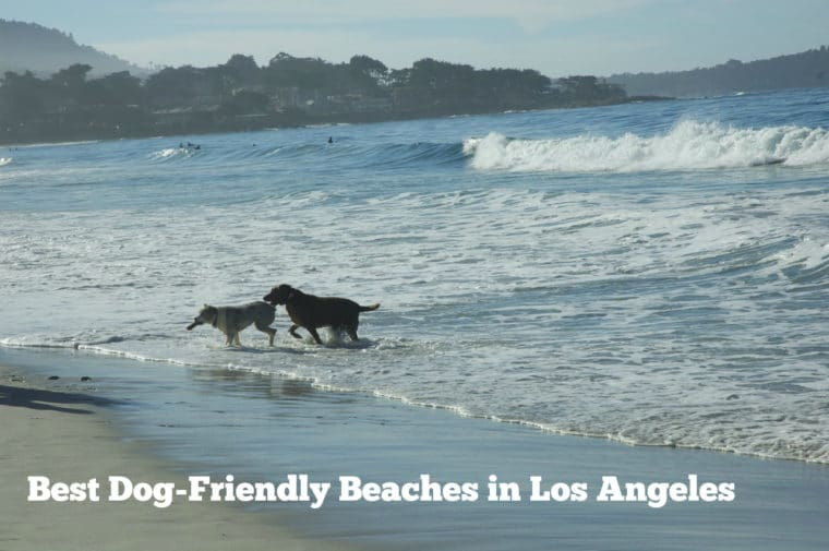 dogs running in the ocean best dog beaches los angeles