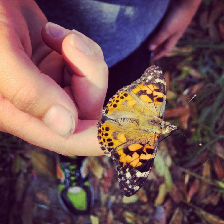 close up of butterfly on a child's finger