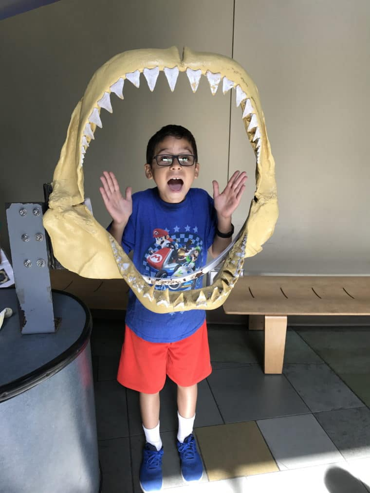 a boy is posing with a silly face inside the fake jaws of a shark