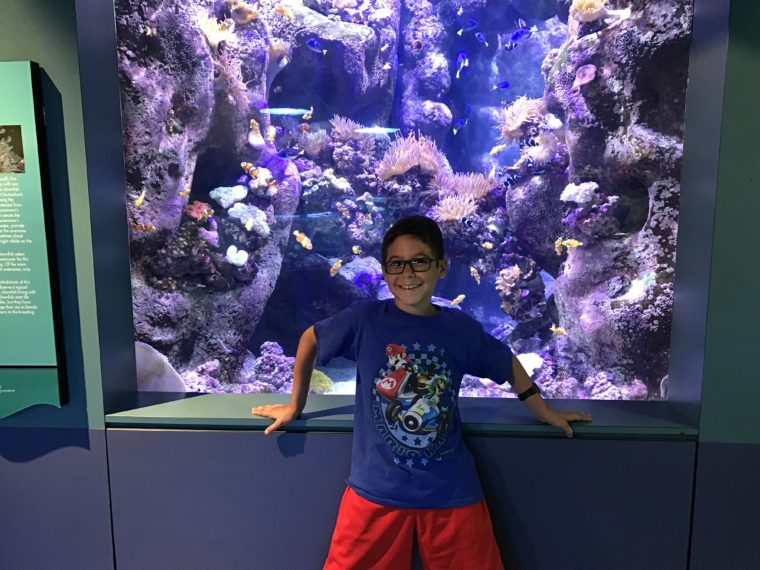 young boy standing in front of one of the tanks at the Aquarium of the Pacific smiling