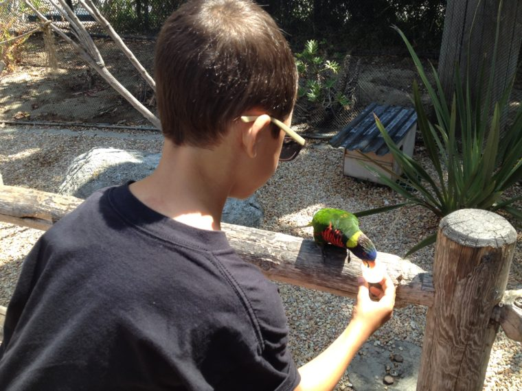 a boy is feeding nectar to a colorful bird in the Lorikeet forest