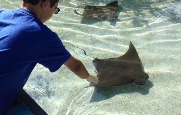 Guide to the Aquarium of the Pacific in Long Beach. #aquarium #longbeach #familytravel #losangeles