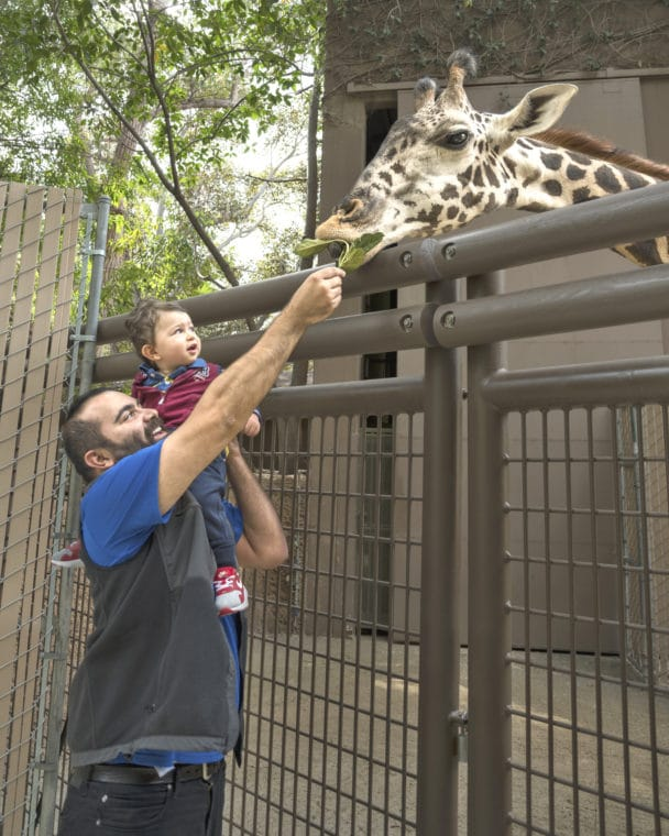 Guide To The Los Angeles Zoo And Botanical Gardens Momsla