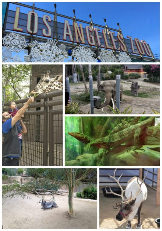 Guide to the Los Angeles Zoo. #LosAngeles #zoo #zooanimals