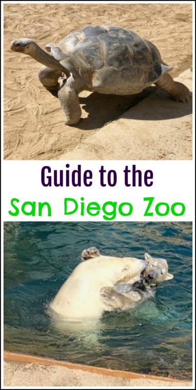 Guide to the San Diego Zoo. #sandiego #familytravel #zoo