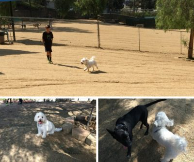 Boneyard Dog Park in Culver City is one of the best dog parks in the Los Angeles area. #losangeles #dogs #losangelesdogs