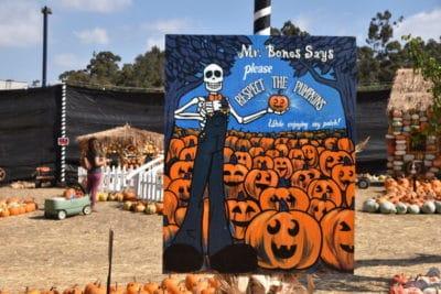 Mr. Bones Pumpkin Patch is great way to celebrate Halloween. #losangeles #pumpkinpatch #thingstodoinlosangeles #losangelesfamily