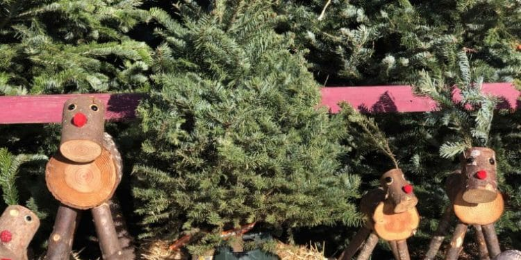 Where to find a Christmas Tree in Los Angeles. #christmastree #christmastreelot