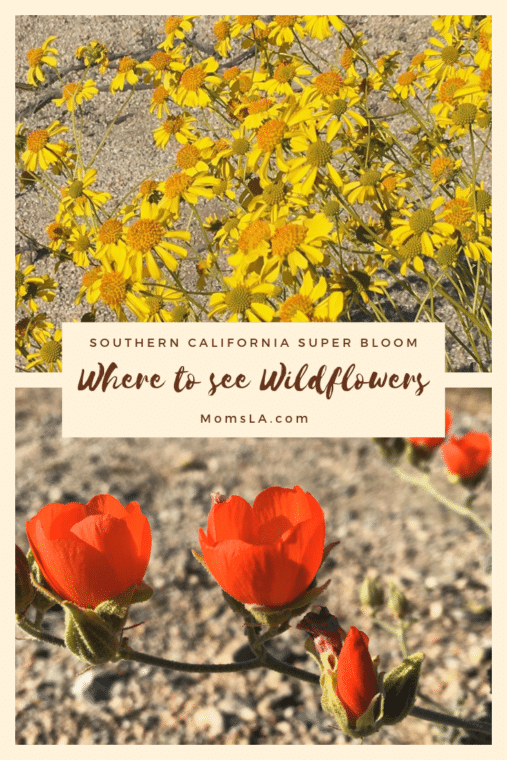 Winter Rain created a spring Super Bloom all over Southern California. Here are 9 places to see wildflowers. #superbloom #wildflowers #southerncalifornia