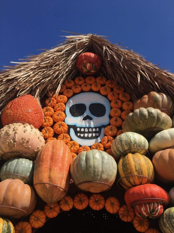 a house made of pumpkins at Mr, Bones pumpkin patch with skull surrounded by pumpkins