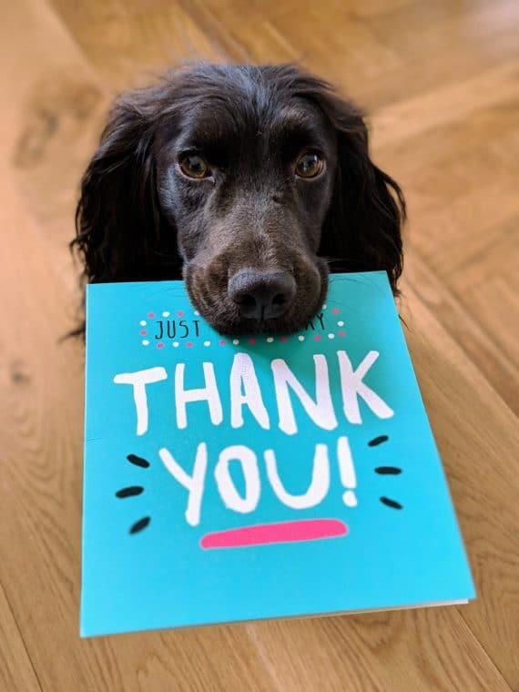 dog-saying-Thank-you
