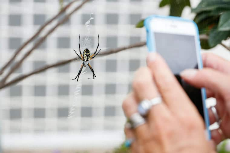 spider photo at _pavillion_natural history museum 2020