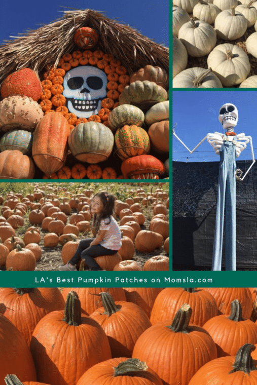 pumpkin patches in Los Angeles