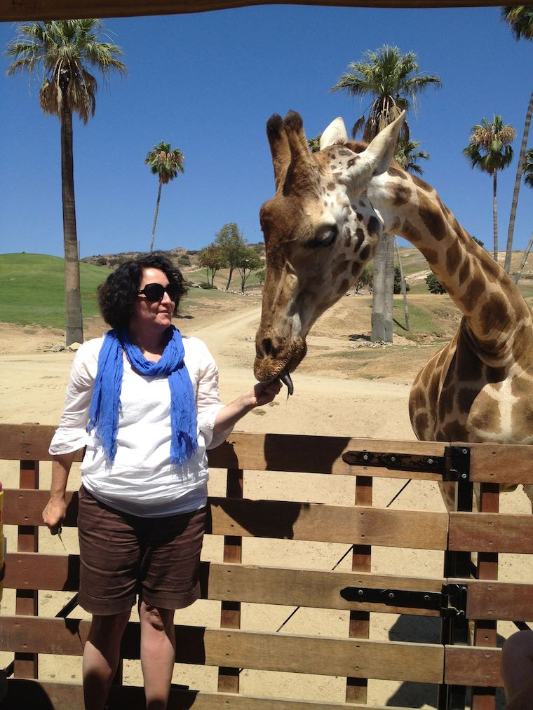 the giraffe feeding experience at the San Diego Safari Park