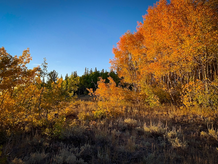 Fall colors photo by Bruce Wendler - Dunderberg Meadows Rd, Mono County, 9-26-20)