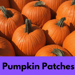 pumpkin patches in los angeles IG link