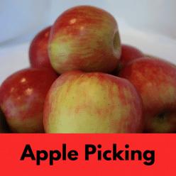 apple picking IG link