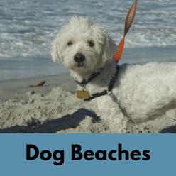 dog beaches in socal