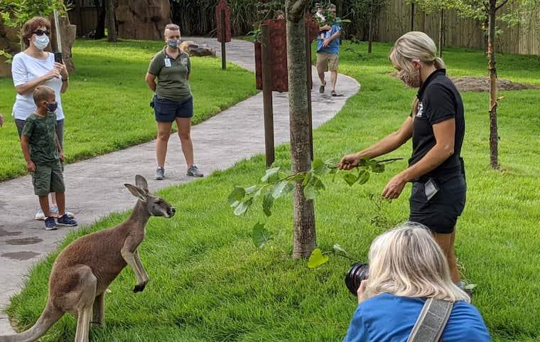 kangaroo-with-people at Cincinnati zoo courtesy of 365 cincinnati