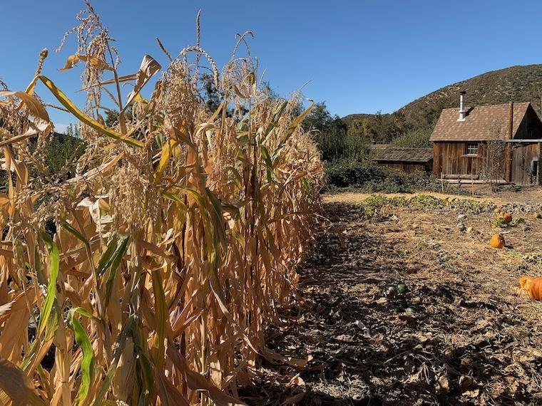 visiting a farm in Oak Glen, California