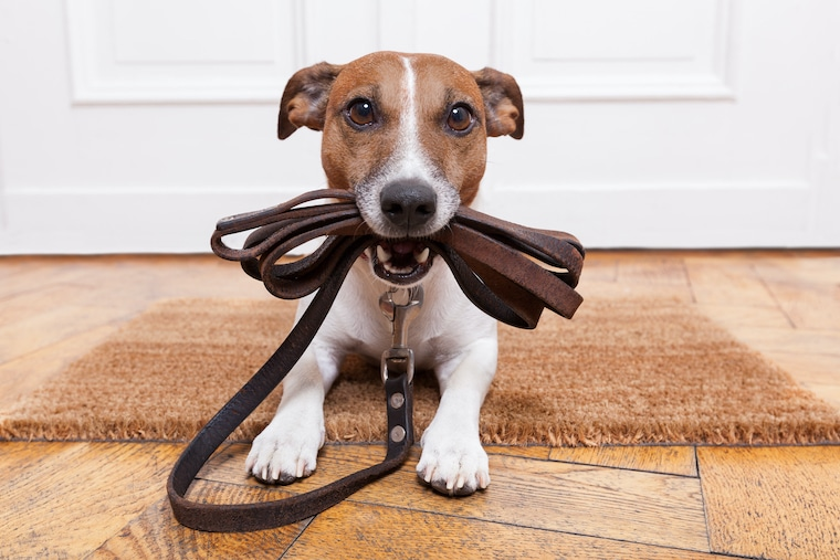 dog with leash in his mouth