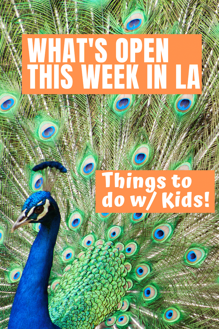 peacock with tail opened text what's open this week in LA Things to do with kids