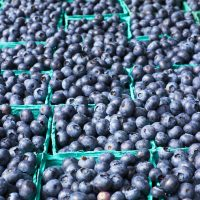 blueberries in cartons at the Farmers Market