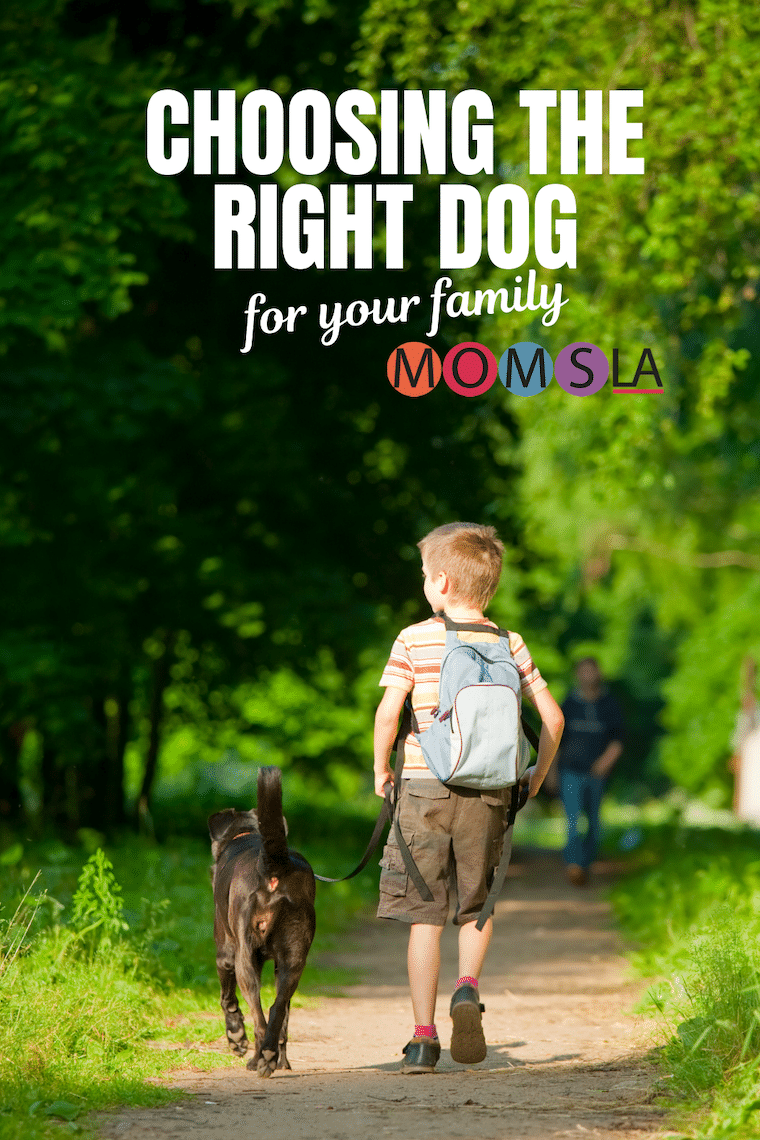 boy walking a dog both facing away from camera text choosing the right dog for your family