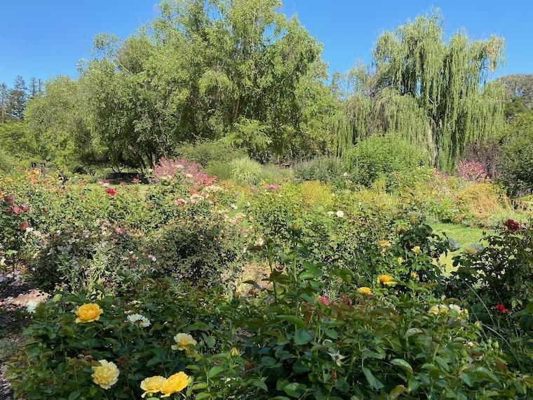 Rose Garden at Descanso Gardens