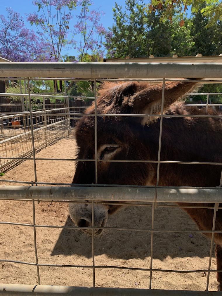 Sweet Donkey at Underwood Family Farms